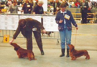 Oldenburg international dog show